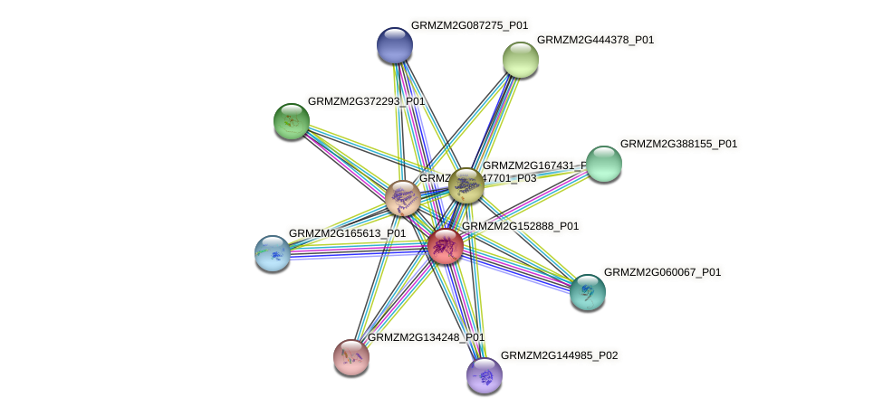 GRMZM2G152888_P01 protein (Zea mays) - STRING interaction network