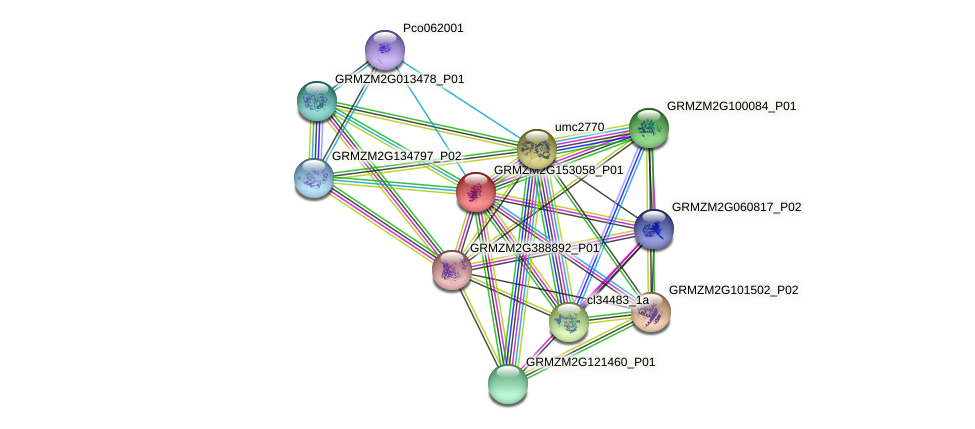 GRMZM2G153058_P01 protein (Zea mays) - STRING interaction network