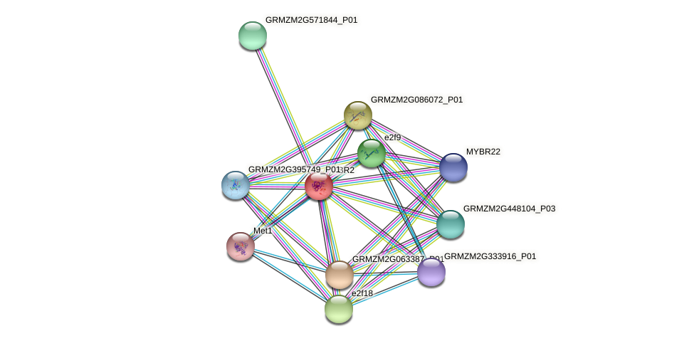 RBR2 protein (Zea mays) - STRING interaction network