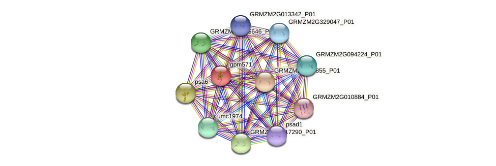 gpm571 protein (Zea mays) - STRING interaction network