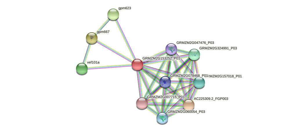 GRMZM2G153252_P01 protein (Zea mays) - STRING interaction network