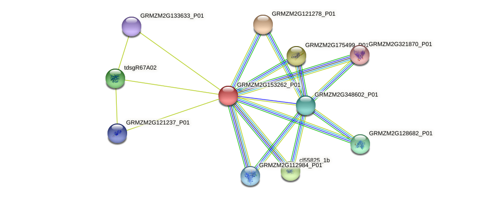 GRMZM2G153262_P01 protein (Zea mays) - STRING interaction network