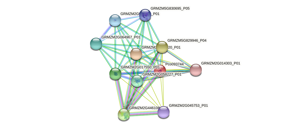 Zm.14318 protein (Zea mays) - STRING interaction network