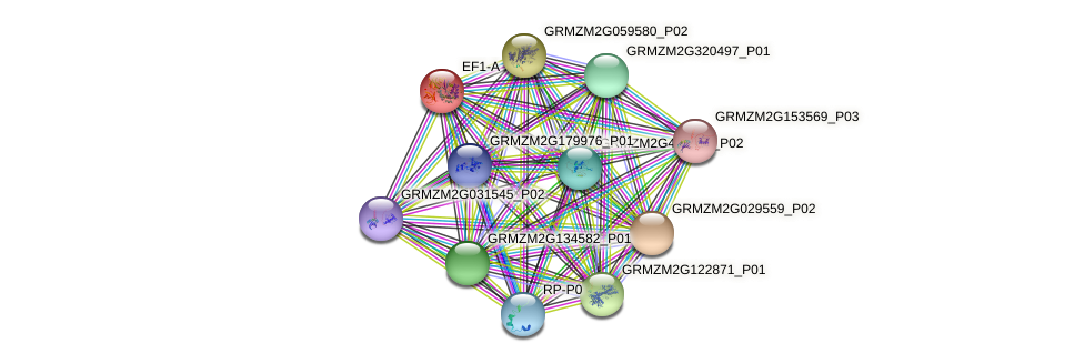 EF1A protein (Zea mays) - STRING interaction network