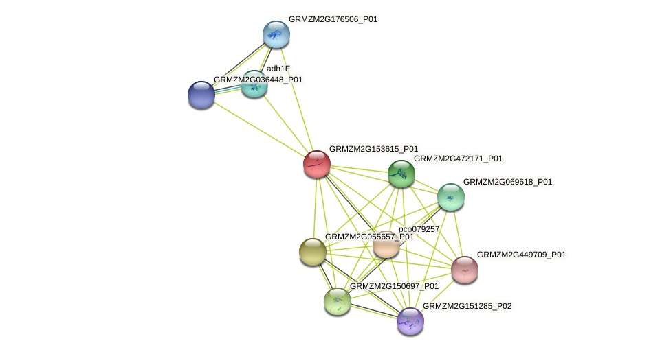 GRMZM2G153615_P01 protein (Zea mays) - STRING interaction network