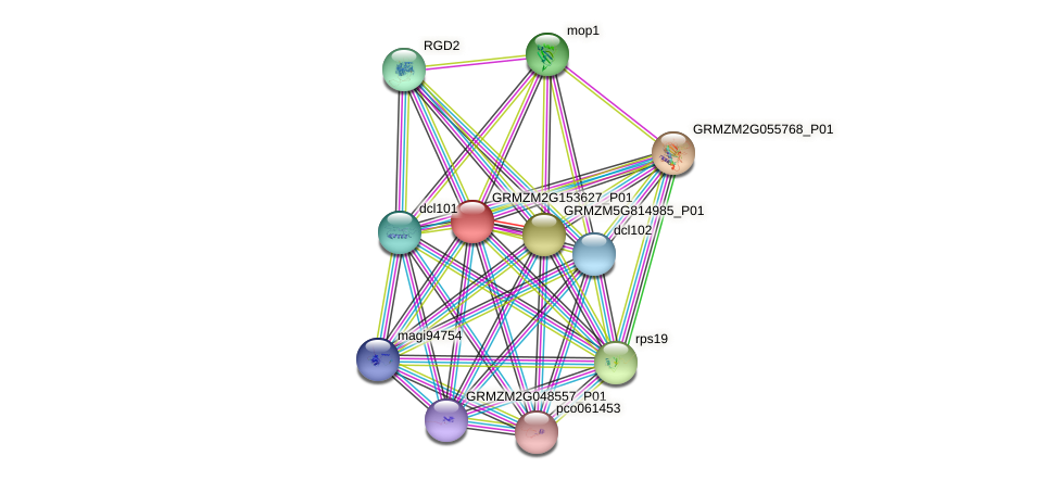 GRMZM2G153627_P01 protein (Zea mays) - STRING interaction network