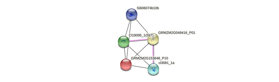 GRMZM2G153648_P10 protein (Zea mays) - STRING interaction network