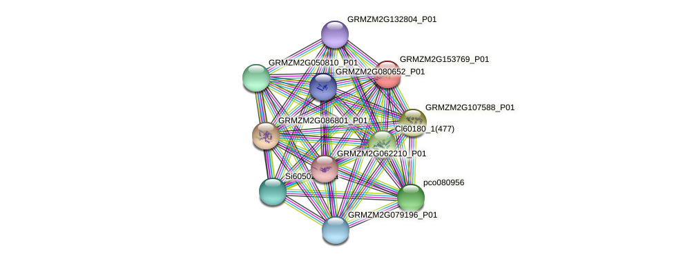 GRMZM2G153769_P01 protein (Zea mays) - STRING interaction network