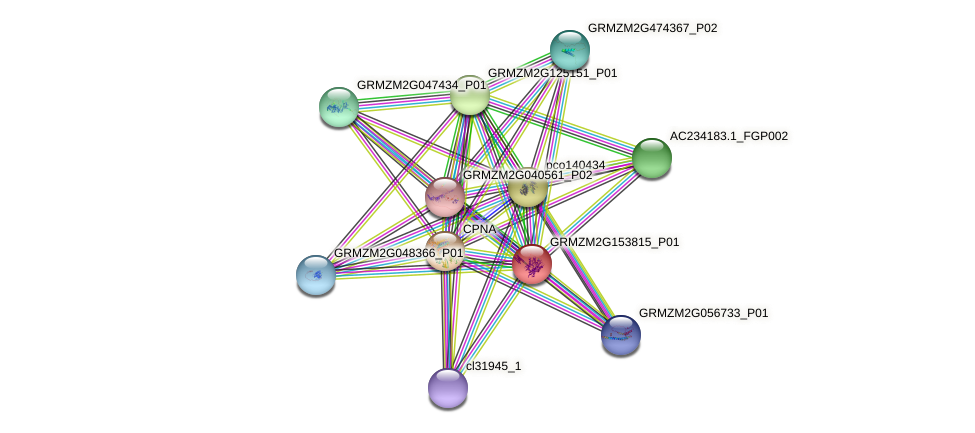 GRMZM2G153815_P01 protein (Zea mays) - STRING interaction network