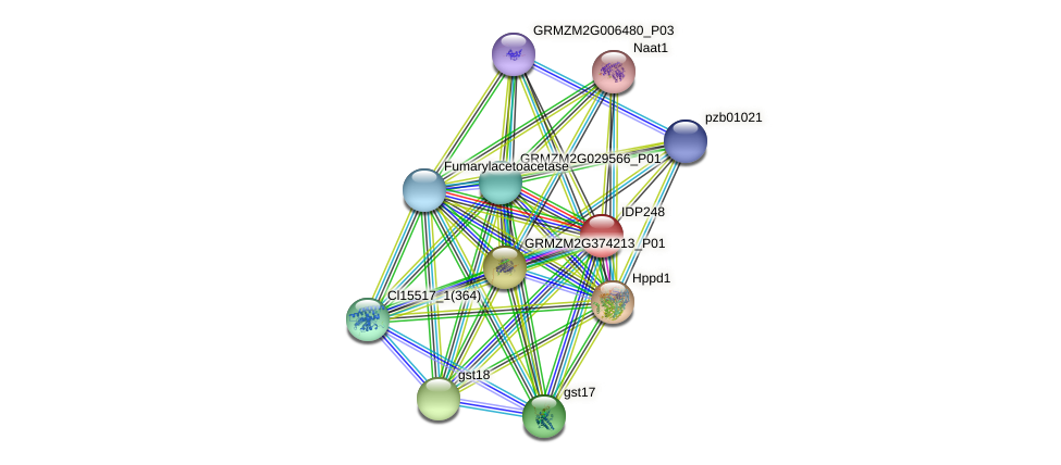 IDP248 protein (Zea mays) - STRING interaction network