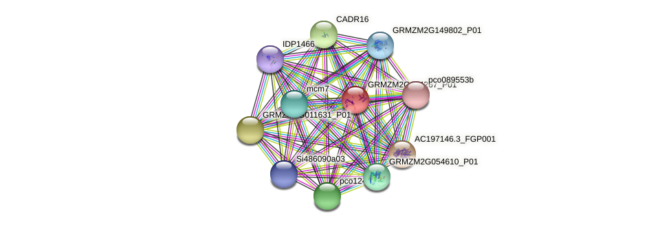 GRMZM2G154267_P01 protein (Zea mays) - STRING interaction network