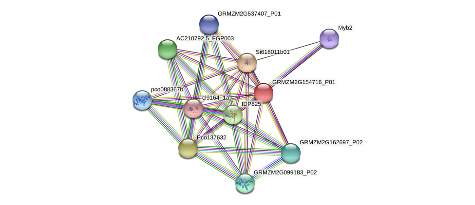 GRMZM2G154716_P01 protein (Zea mays) - STRING interaction network
