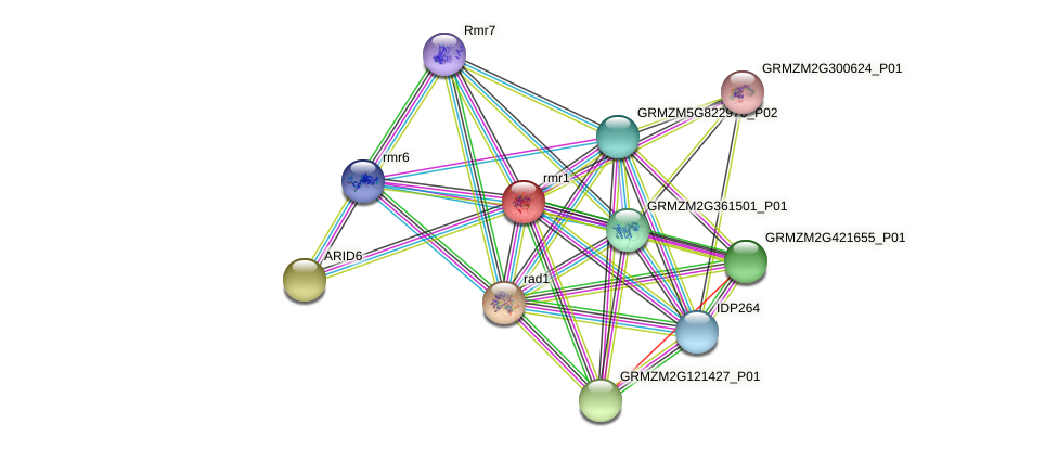 rmr1 protein (Zea mays) - STRING interaction network