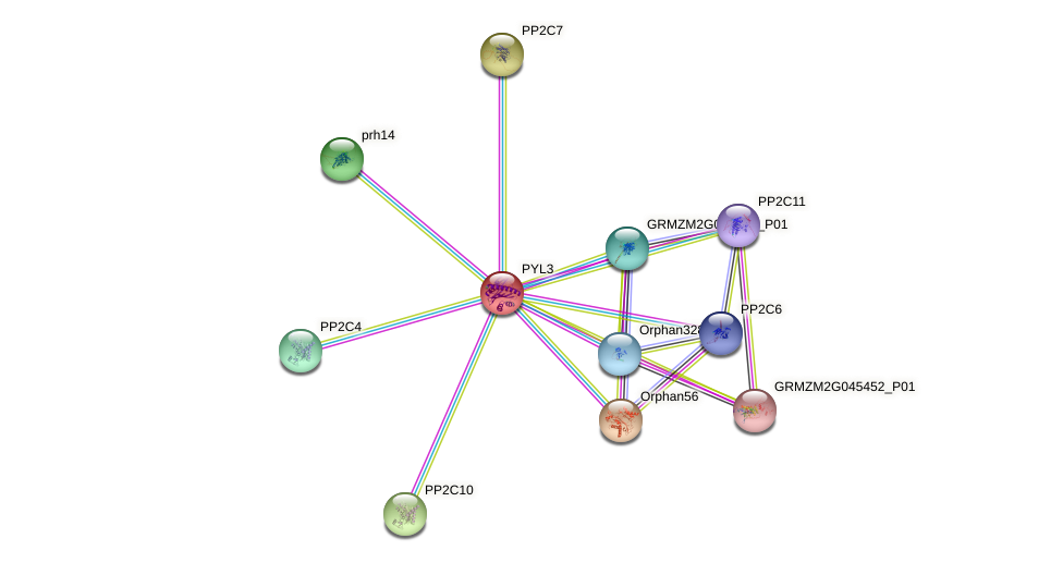 PYL3 protein (Zea mays) - STRING interaction network