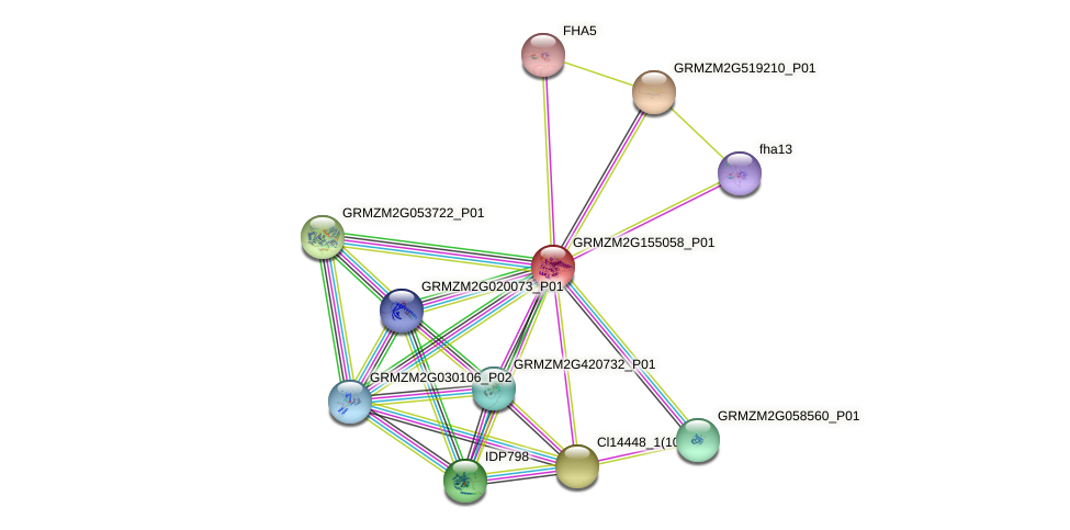 Zm.64893 protein (Zea mays) - STRING interaction network