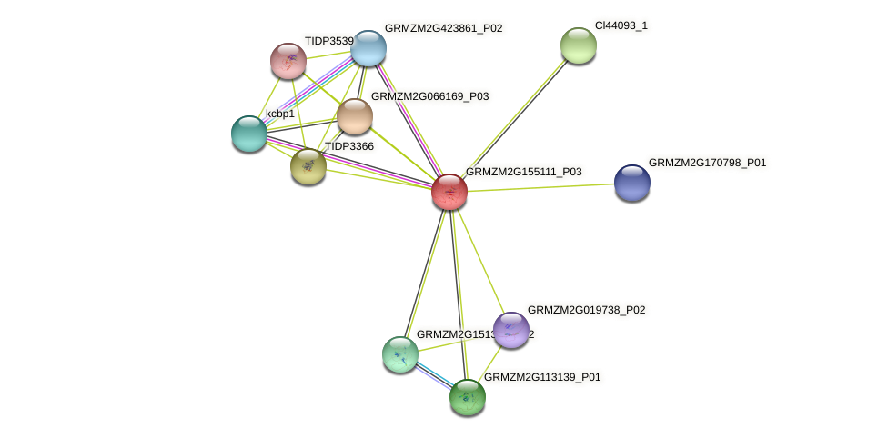 Zm.36137 protein (Zea mays) - STRING interaction network