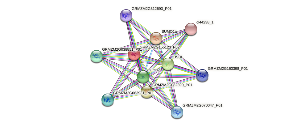 phd17 protein (Zea mays) - STRING interaction network