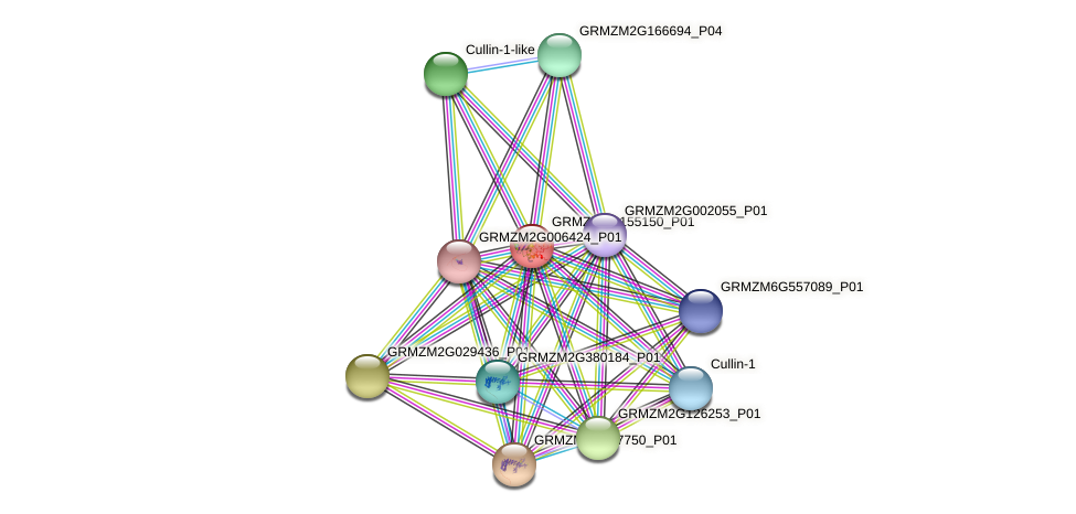 GRMZM2G155150_P01 protein (Zea mays) - STRING interaction network