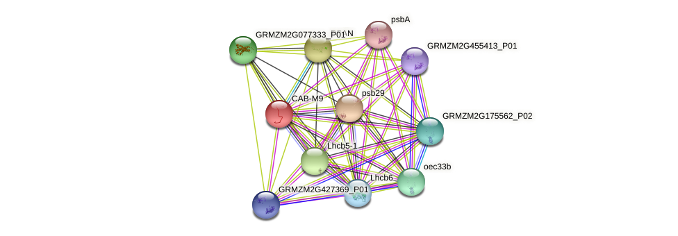 CAB-M9 protein (Zea mays) - STRING interaction network