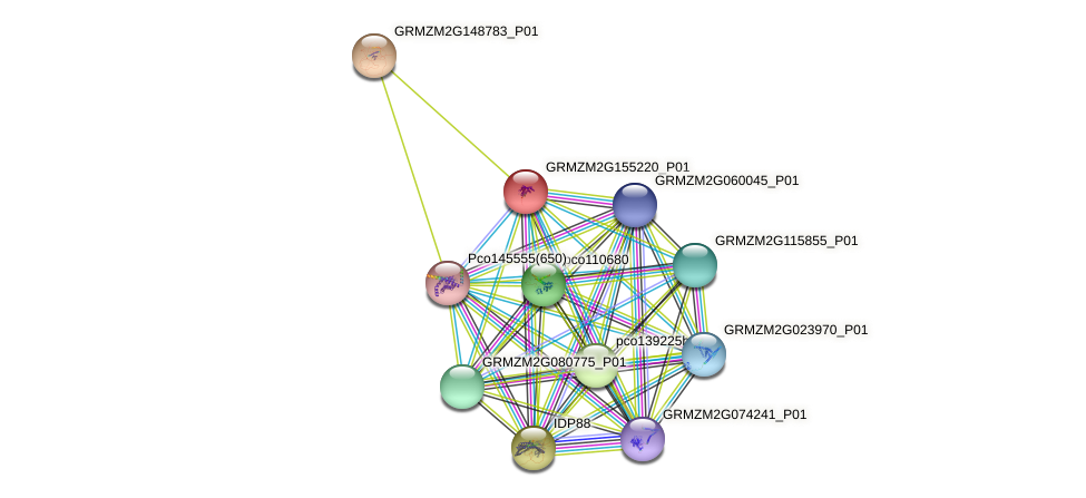 Zm.24331 protein (Zea mays) - STRING interaction network