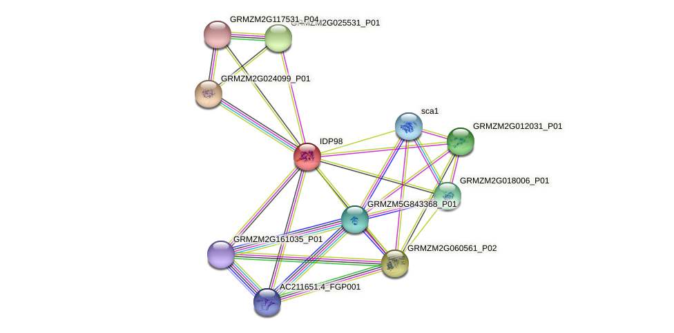GRMZM2G155232_P01 protein (Zea mays) - STRING interaction network