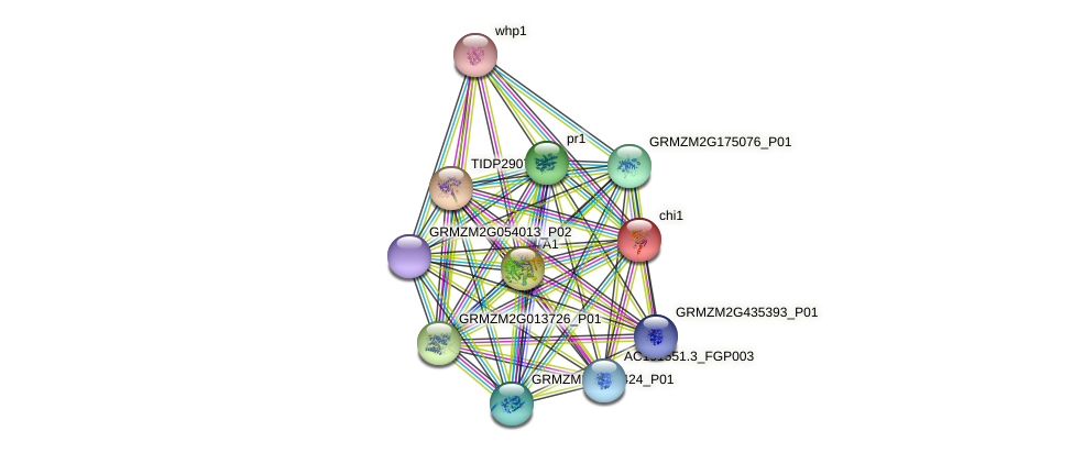 CHI protein (Zea mays) - STRING interaction network