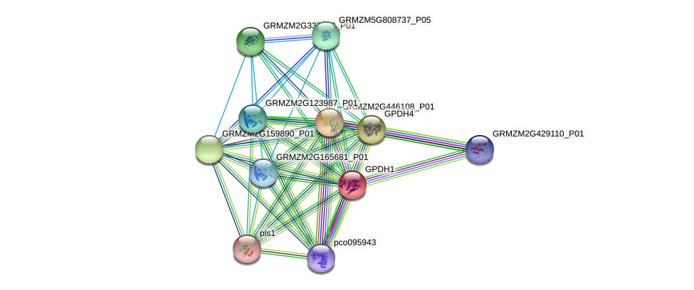 GRMZM2G155348_P01 protein (Zea mays) - STRING interaction network