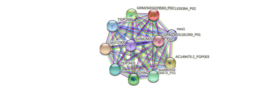 Zm.26029 protein (Zea mays) - STRING interaction network