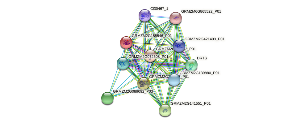 GRMZM2G155546_P01 protein (Zea mays) - STRING interaction network