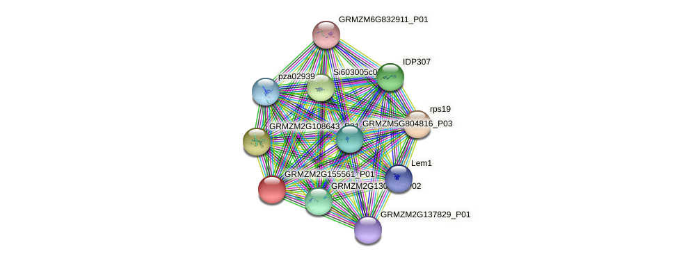 GRMZM2G155561_P01 protein (Zea mays) - STRING interaction network