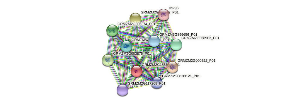 GRMZM2G155626_P01 protein (Zea mays) - STRING interaction network