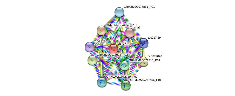 GRMZM2G155931_P01 protein (Zea mays) - STRING interaction network