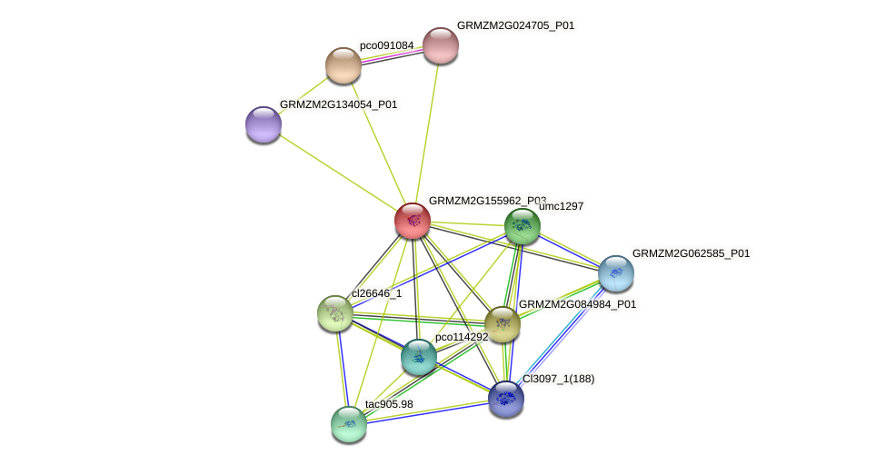 GRMZM2G155962_P03 protein (Zea mays) - STRING interaction network