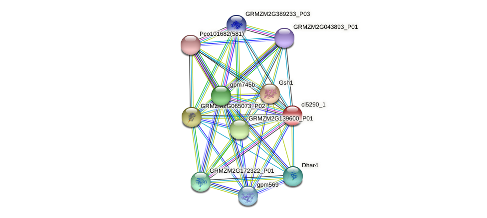 cl5290_1 protein (Zea mays) - STRING interaction network