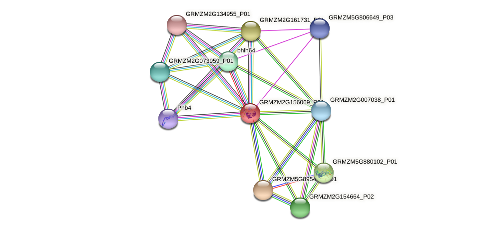 GRMZM2G156069_P01 protein (Zea mays) - STRING interaction network
