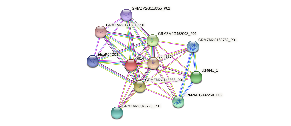 Zm.159922 protein (Zea mays) - STRING interaction network