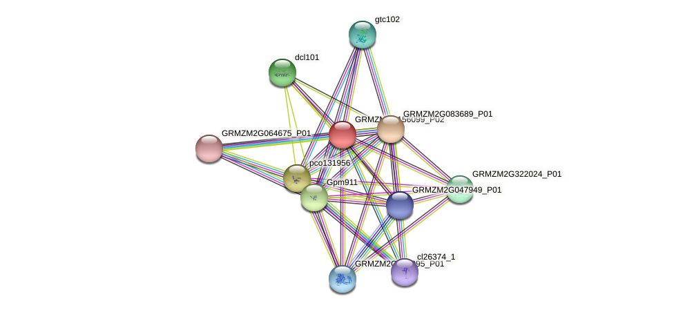 GRMZM2G156099_P02 protein (Zea mays) - STRING interaction network