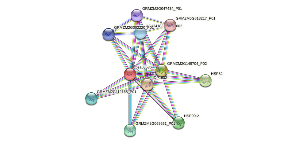 pza03536 protein (Zea mays) - STRING interaction network