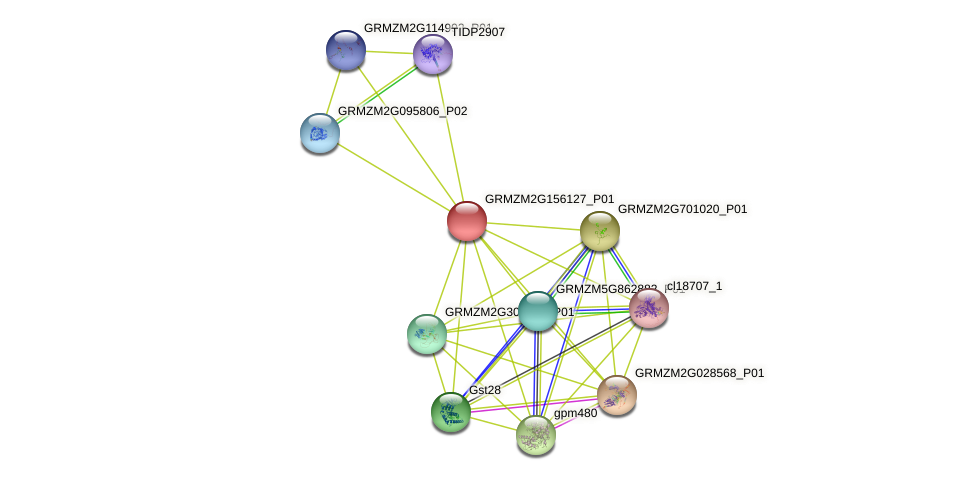 Zm.28595 protein (Zea mays) - STRING interaction network