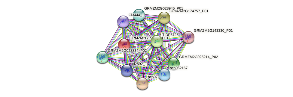 GRMZM2G156333_P01 protein (Zea mays) - STRING interaction network