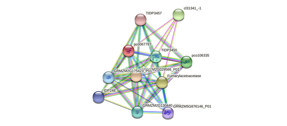 pco067797 protein (Zea mays) - STRING interaction network