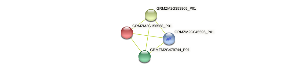 GRMZM2G156568_P01 protein (Zea mays) - STRING interaction network