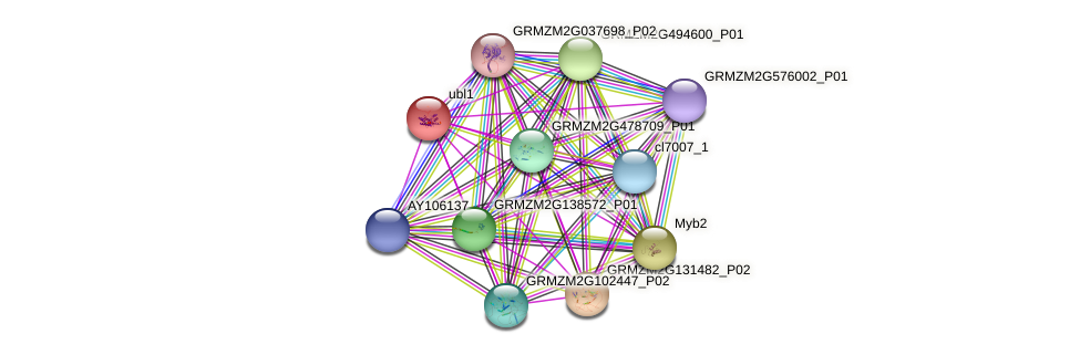 GRMZM2G156575_P01 protein (Zea mays) - STRING interaction network