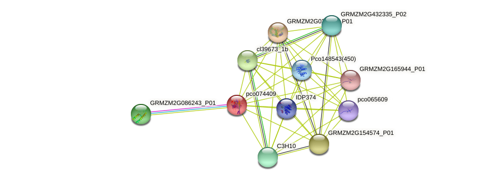 pco074409 protein (Zea mays) - STRING interaction network