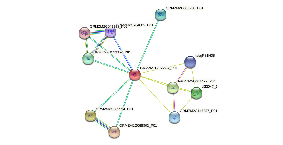 GRMZM2G156684_P01 protein (Zea mays) - STRING interaction network