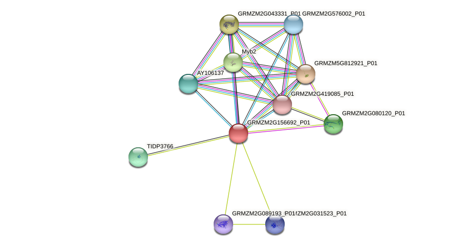 GRMZM2G156692_P01 protein (Zea mays) - STRING interaction network