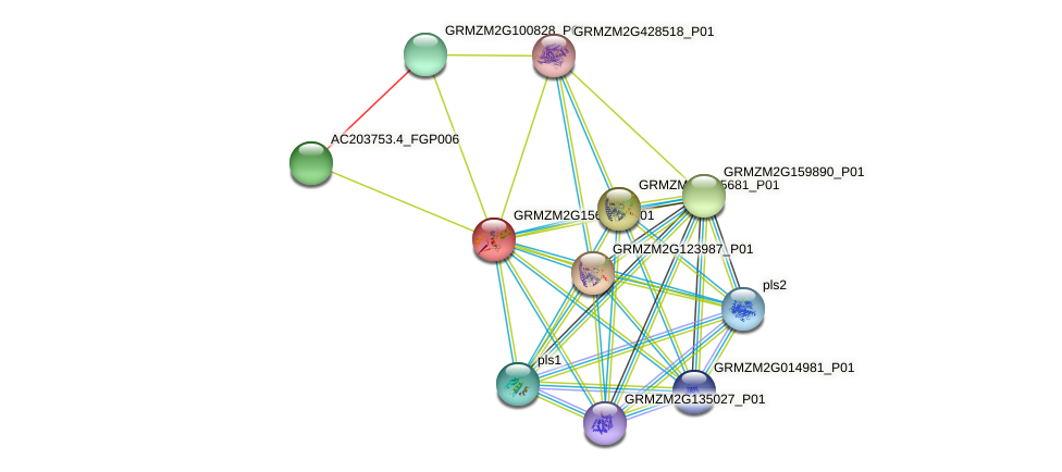 Zm.133319 protein (Zea mays) - STRING interaction network