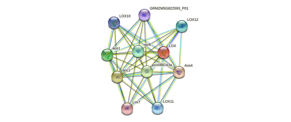 LOX protein (Zea mays) - STRING interaction network