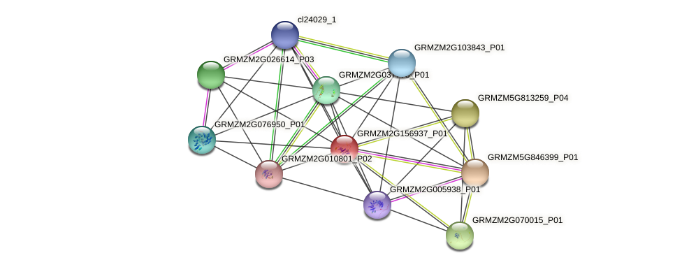 GRMZM2G156937_P01 protein (Zea mays) - STRING interaction network