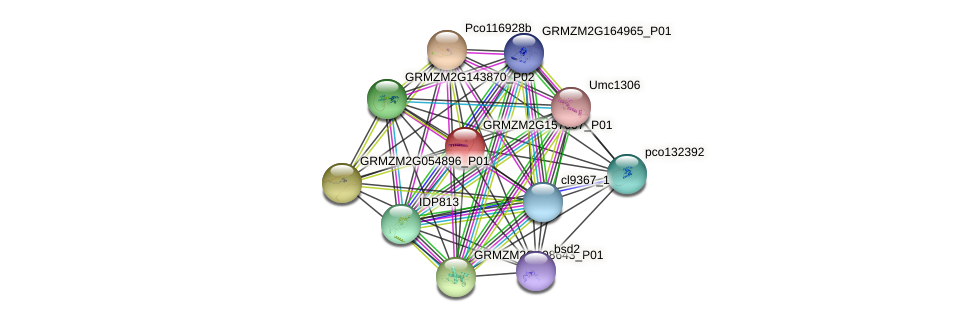 GRMZM2G157007_P01 protein (Zea mays) - STRING interaction network